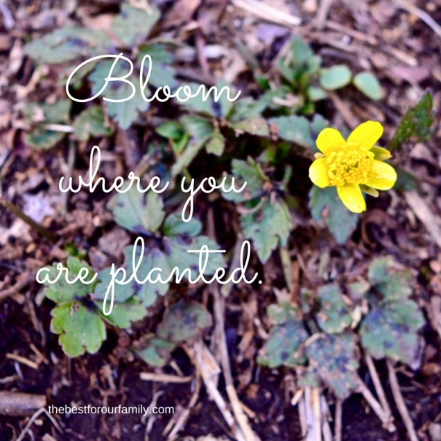 Bloom where you are planted..jpg